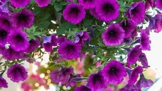 7 Plantinhas Que São Cheias De Flores – Atrai Borboletas e Beija Flores Para Sua Casa ou Jardim