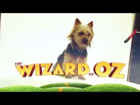 THE WIZARD OF OZ | A CHAT WITH TOTO!