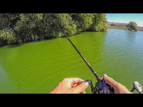 Fishing In ULTRA GREEN Water - Do Fish Live Here?