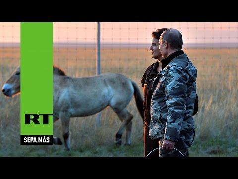 Putin visita una reserva de caballos salvajes y libera a 6 de ellos