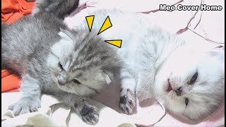 Kittens Sleeping When Other Kittens Want To Outside | Kittens Funny 2018