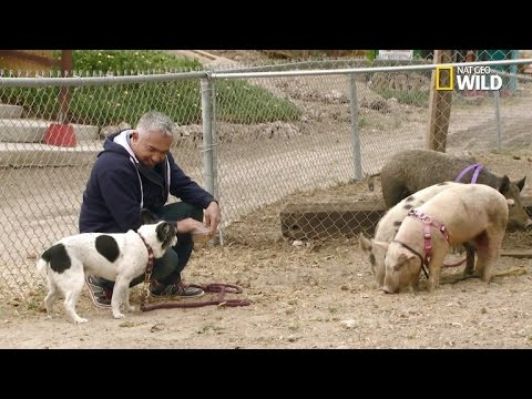 Owner of Dog Defends Cesar Millan: No Crime Took Place During Filming