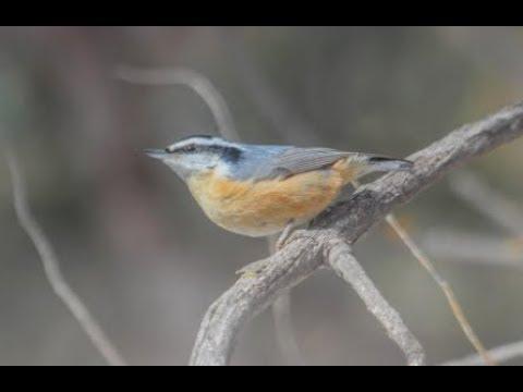 """Naturalist Nights - """"Birding the Roaring Fork Valley"""""""