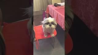 Вредная собака