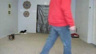 Beagle Off Leash Obedience Session - Ohio Dog Training Expert