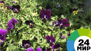 Домашние фикусы и экзотичные аглаонемы: праздник цветов прошел в Тбилиси - МИР 24