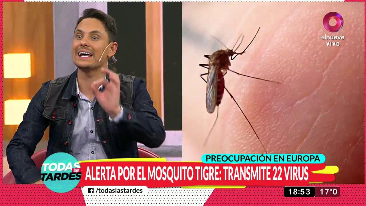 como curar picaduras de mosquito tigre