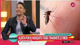 Mosquito Tigre alerta a Europa: Transmite 22 virus
