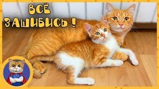 Спасенный котеночек знакомится с Рыжиком, Печенькой, Гаффи и Мими