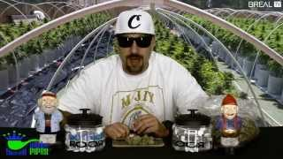 Strain Review w/ Dr. Greenthumb - Oracle OG | BREALTV