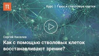 Новые технологии в лечении болезней зрения — Сергей Киселев(Источник —http://postnauka.ru/video/48476 Как с помощью геннотерапии лечат генетические заболевания глаз? Почему зрение..., 2015-06-29T07:39:47.000Z)