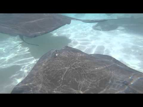 Cayman Islands/Grand Cayman GoPro Edit **Click HD- 1080p**