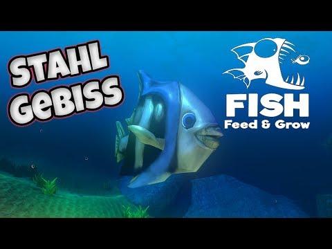 Feed and Grow : Fish # 8 - Aufblasen für Anfänger
