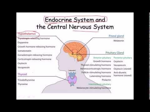 35. Endocrine System