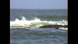 Ocean Waves Ocean City, NJ 2003 by Geoff W. Sutton