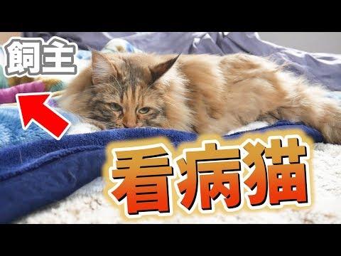 Cat nursing norovirus owner by side