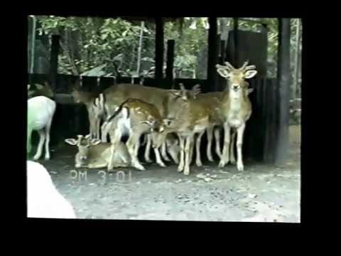 1988-10-29 - São Paulo SP - Simba Safari - Zoologico