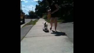 Ty Learns To Skateboard-dog Training In London, Ontario