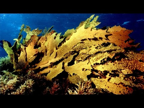 Marine heatwave wipes out Great Southern Reef kelp forests