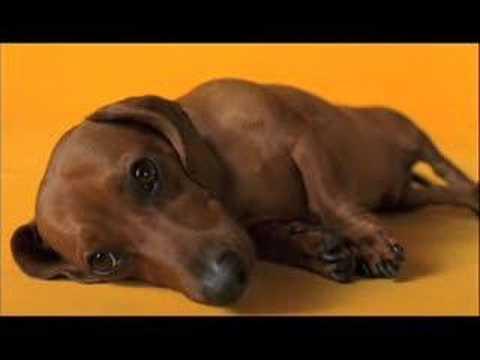 Doggy dentures advert