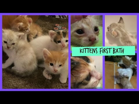Kittens First Bath | Caticorn productions first vid!!
