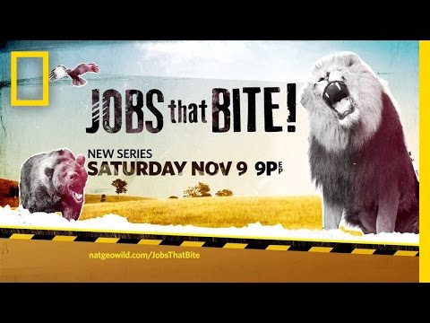 Jobs That Bite  National Geographic