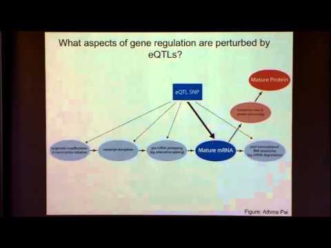 Genetic Variation in Gene Regulation