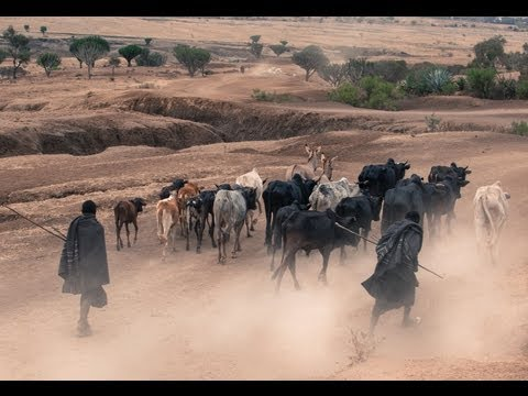 Feeding The Soil or Feeding The Cow [2013]