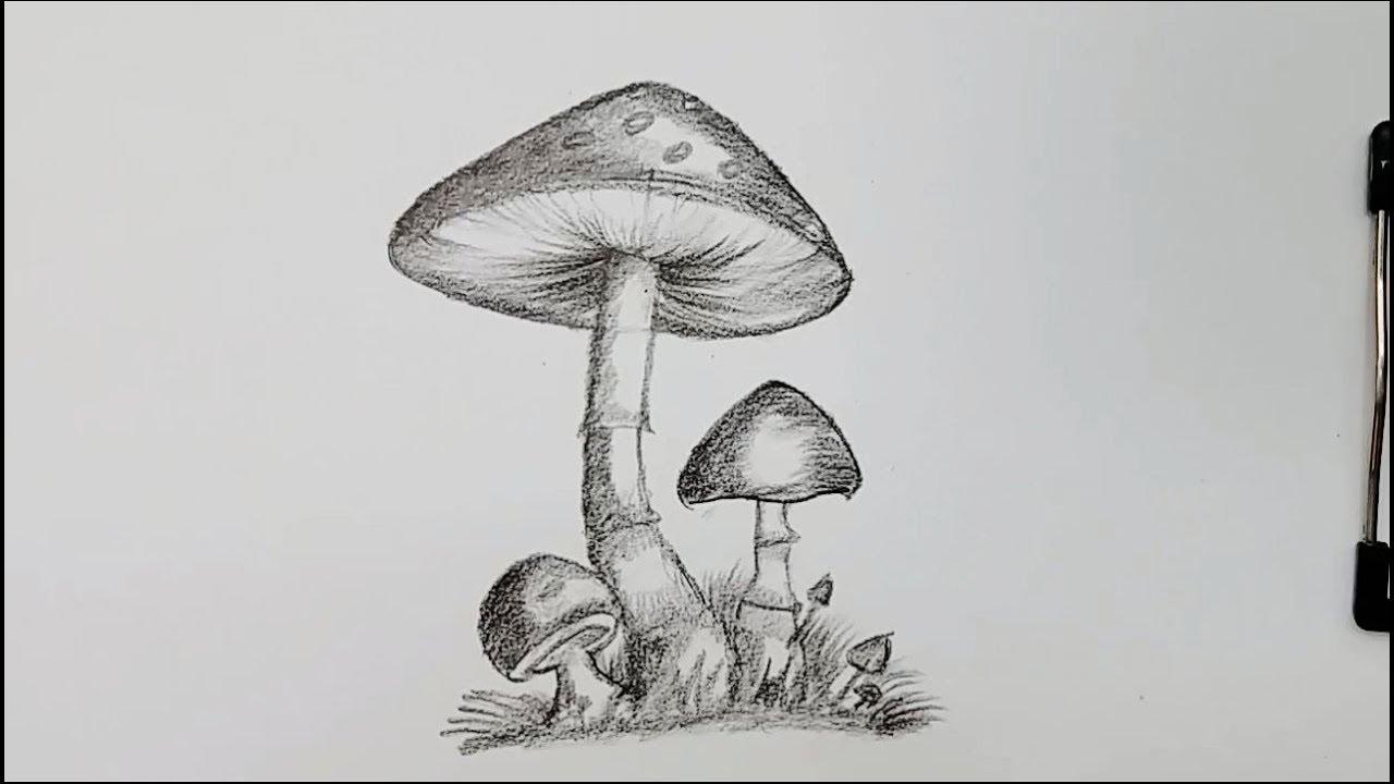 how to draw mushroom step by step