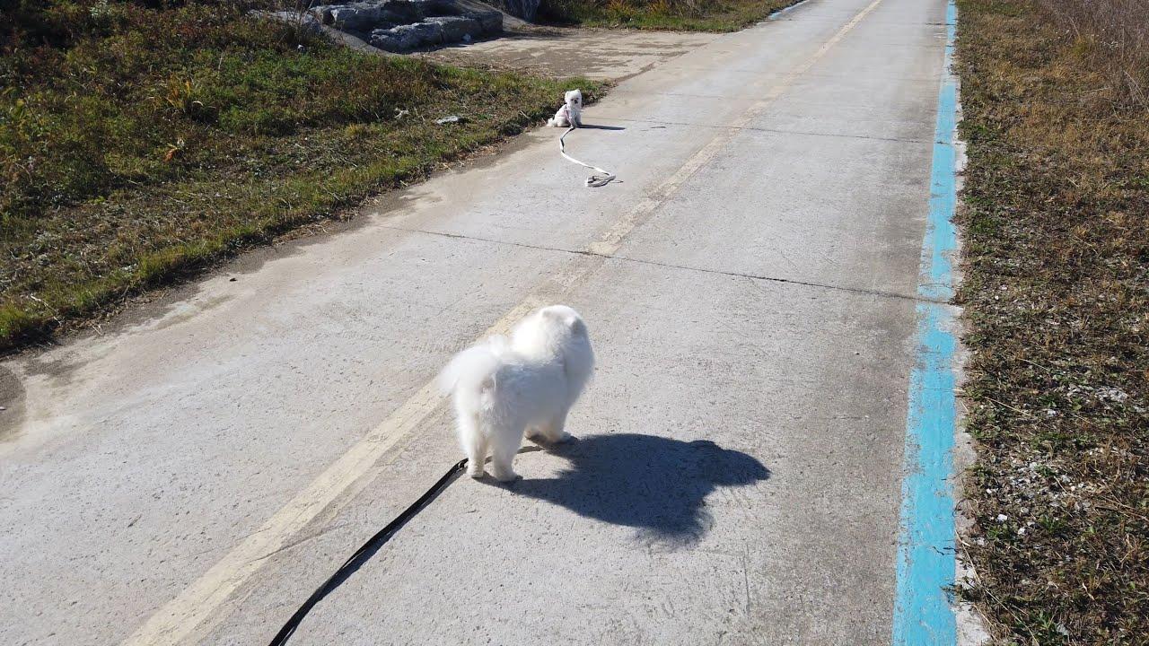우리 같이 산책할까? [#26 퐁키를 길바닥에 버리고 왔더니...]