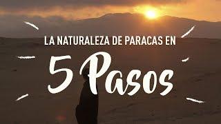 BUEN VIAJE a Paracas - Reserva Nacional del Peru