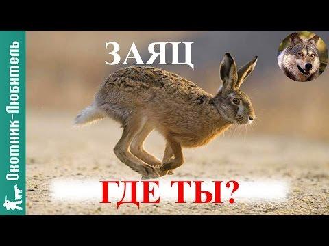Где искать зайца на охоте?