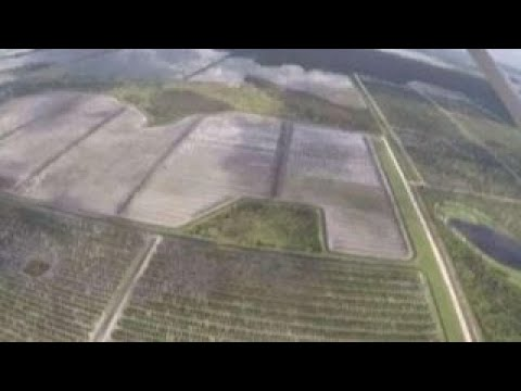 Hurricane Irma hits Florida's agriculture industry