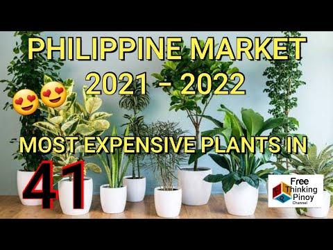PINAKA MAHAL NA HALAMAN   41 Most Expensive Plants In the Philippines