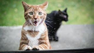 Смешные, злые и напуганные животные