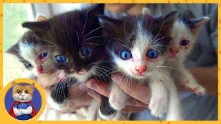 Спасение четырех маленьких котят