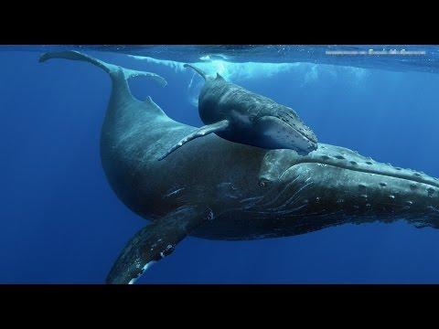 Herman, A Whale Speaks  Kerry Keegan