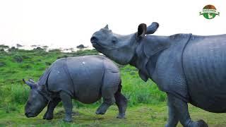Kaziranga - The Rhino Kingdom