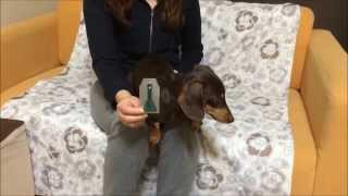 犬のノミとダニに効く『フロントラインプラス』使用方法。 我が家のミニ...