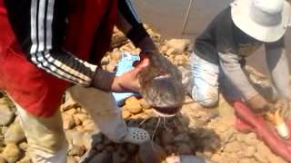Pesca en el rio Ichilo [Santa cruz - Bolivia]