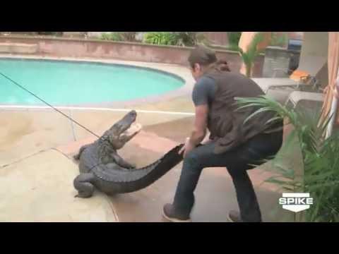 Alligator Wants Breakfast Doovi