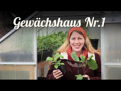 Gewächshaus vorbereiten & bepflanzen 🌹 Erfahrungen und Tipps 🌹 Selbstversorger Garten
