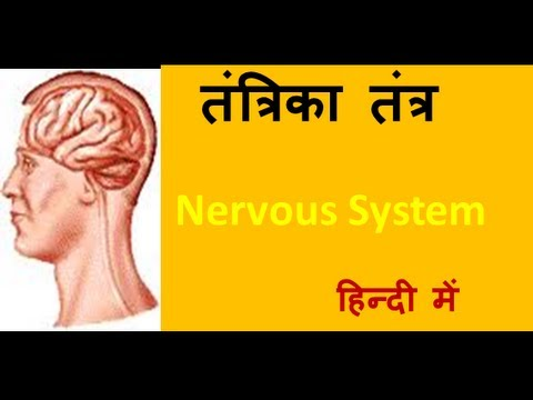 Human nervous system in hindi urdu for children youtube human nervous system in hindi urdu for children ccuart Image collections