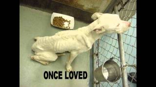 SAD ABANDONED MEXICAN STRAY DOGS STARVING PICS :(