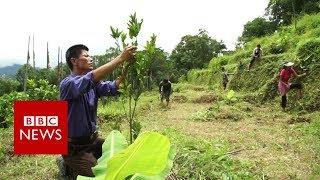 Will organic revolution boost farming in India? - BBC News