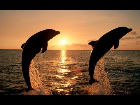 10 Beautiful Sunsets Scenes With Dolphins