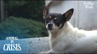 Dog Believes Her Owner Will Come Back One Day If She Waits, But.. | Animal in Crisis EP168