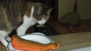 whiskas the best cat food in the world.wmv
