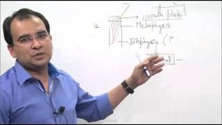 Dr. Bhatia Medical Institute:- (Satellite Classes Anatomy Part - 6)