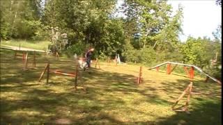 Borzoi agilityträning
